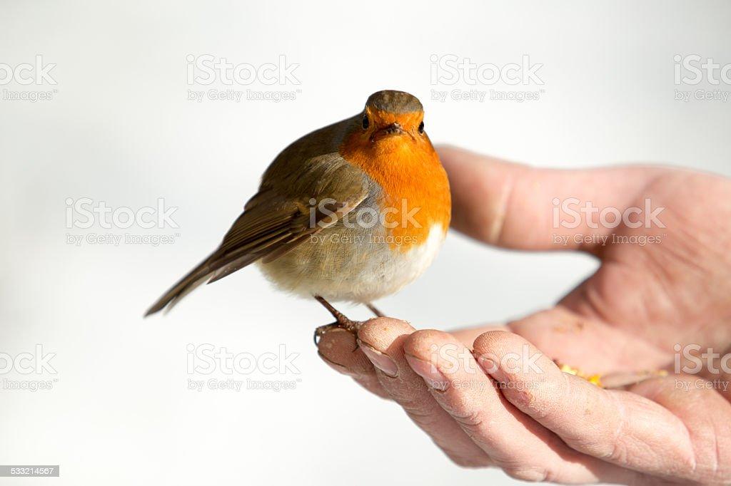 Bird in the hand stock photo