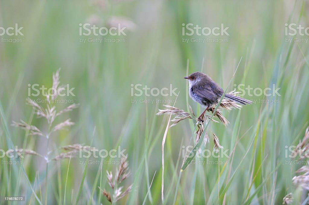 Bird in the morning stock photo