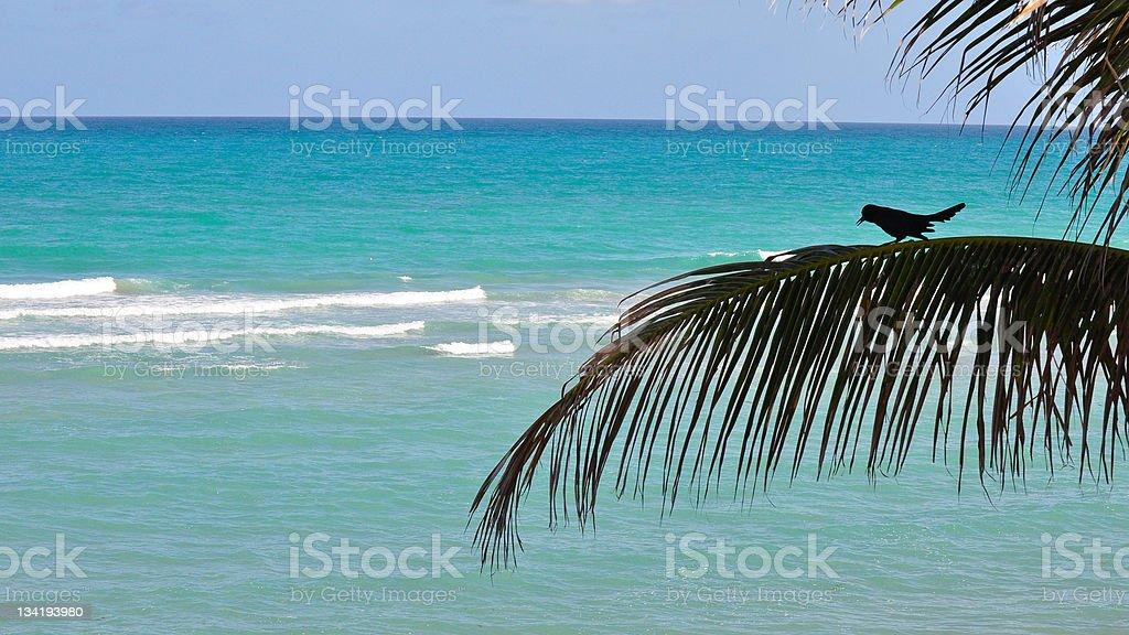 bird in the tree at Florida coastline royalty-free stock photo