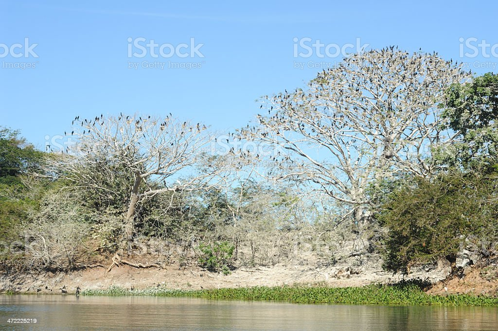 Bird island on the lake of Suchitlan near Suchitoto stock photo