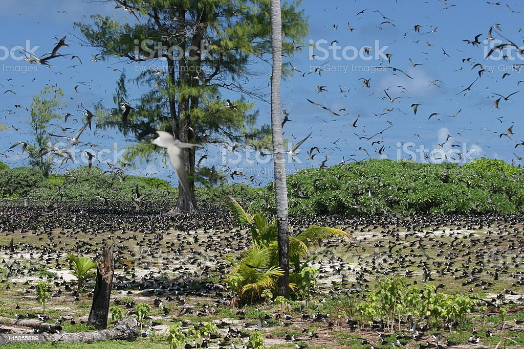 Bird Island royalty-free stock photo