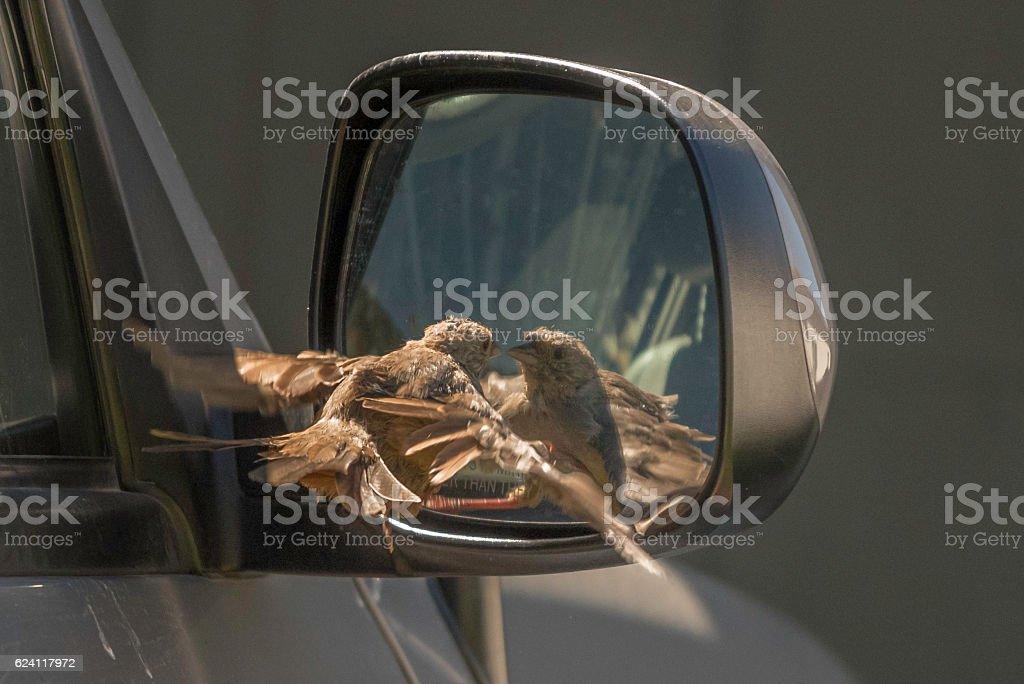 Bird Looking in Mirror stock photo
