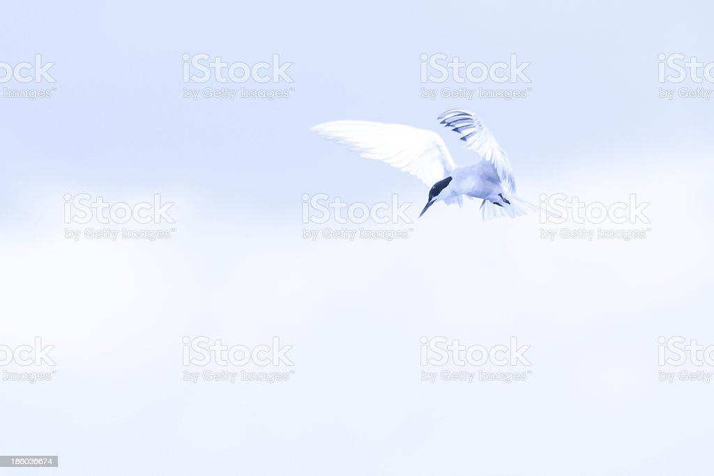 Bird looking into the water for fish. stock photo