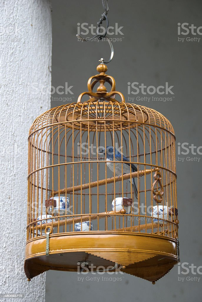 Bird Market stock photo