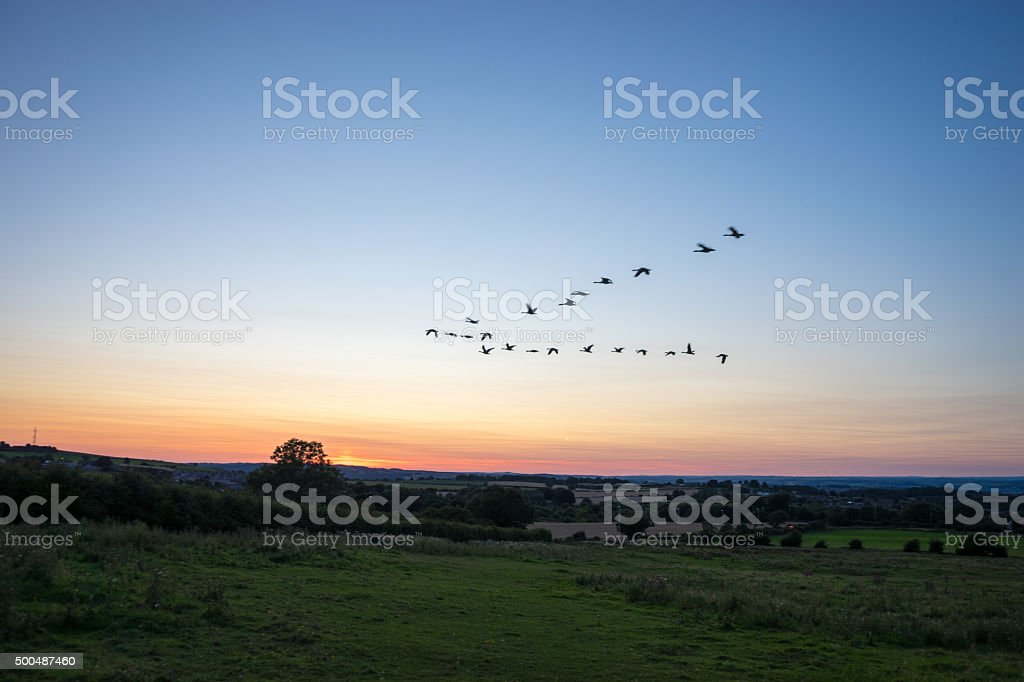 Bird Migration at Sunset stock photo