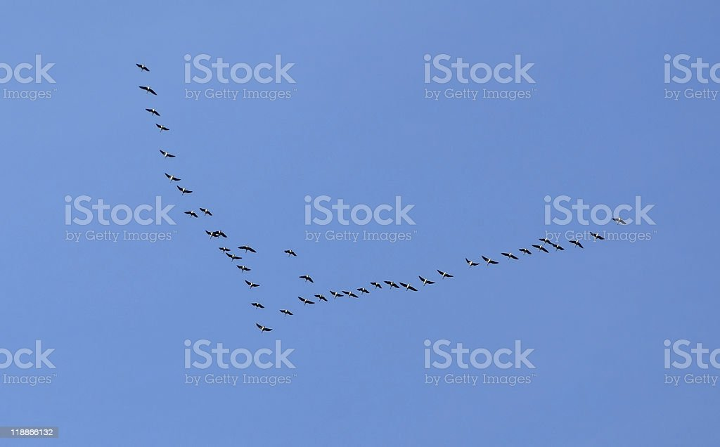 Bird Migration royalty-free stock photo
