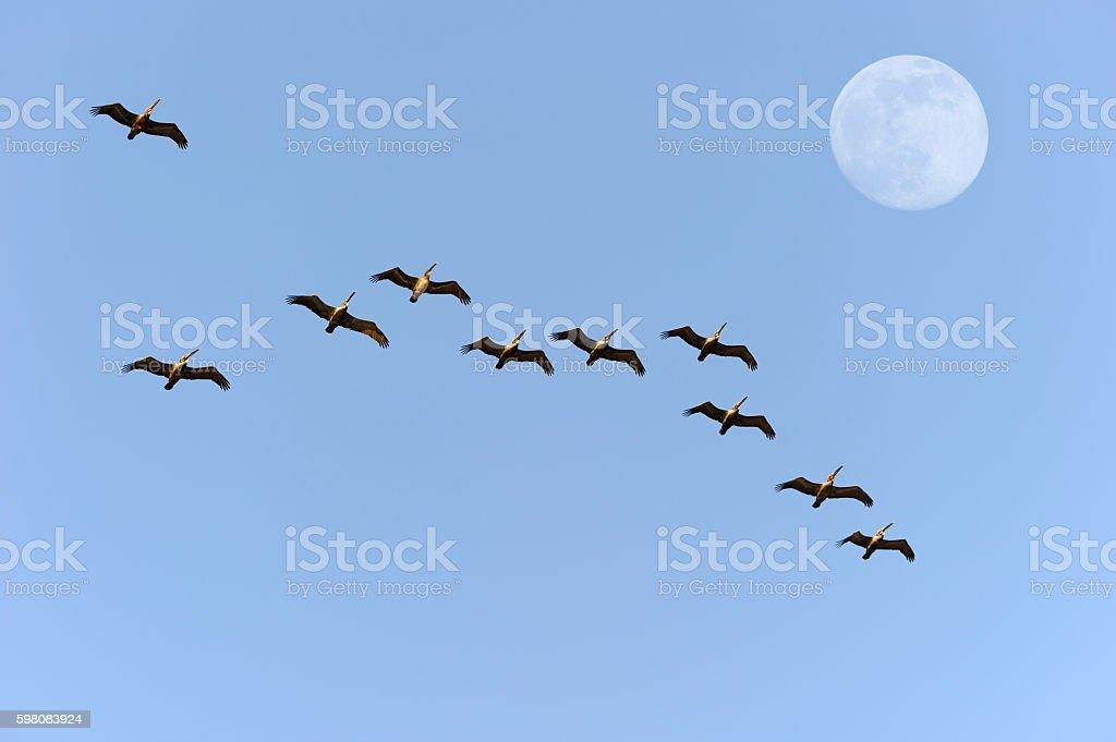 Bird Migration stock photo