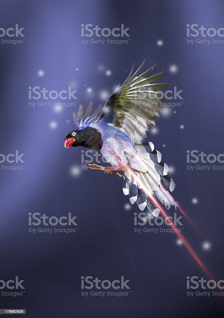 bird modern stylish playcard royalty-free stock photo