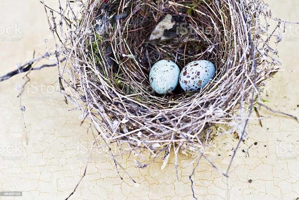 Bird Nest and Real Eggs stock photo