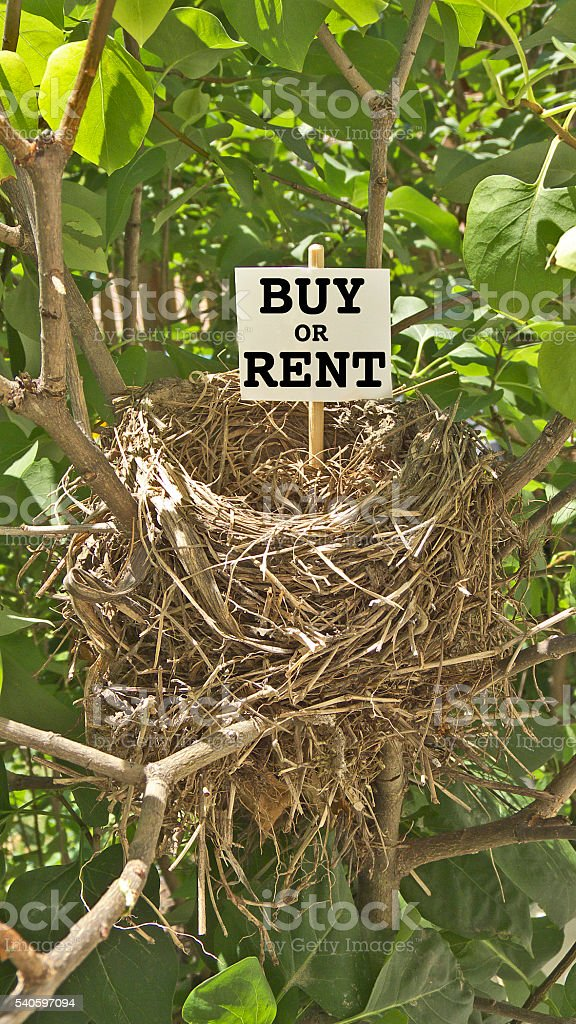 Bird Nest and Real Estate Humor stock photo