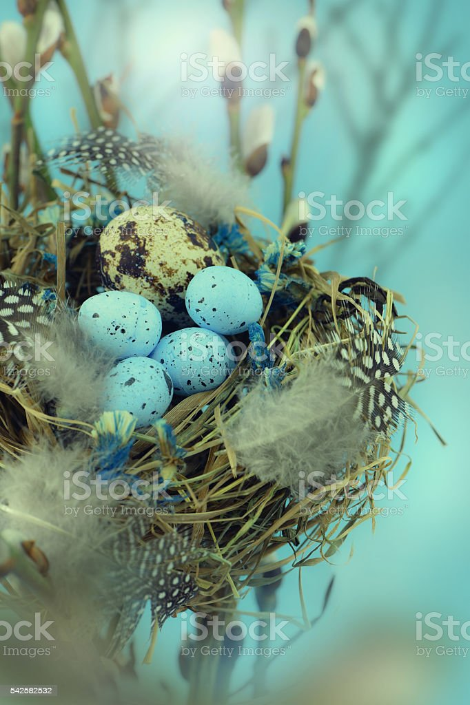 Bird nest in a tree with easter eggs for Easter. stock photo
