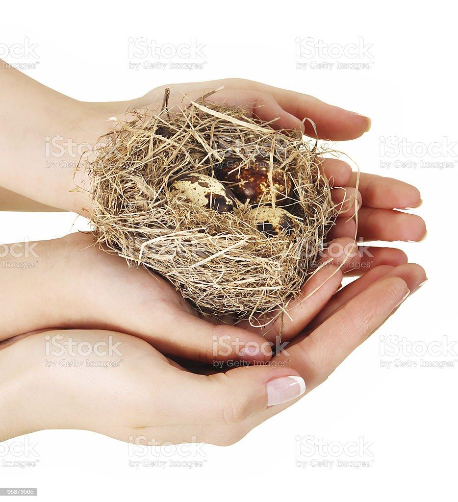 Bird nest in hands royalty-free stock photo
