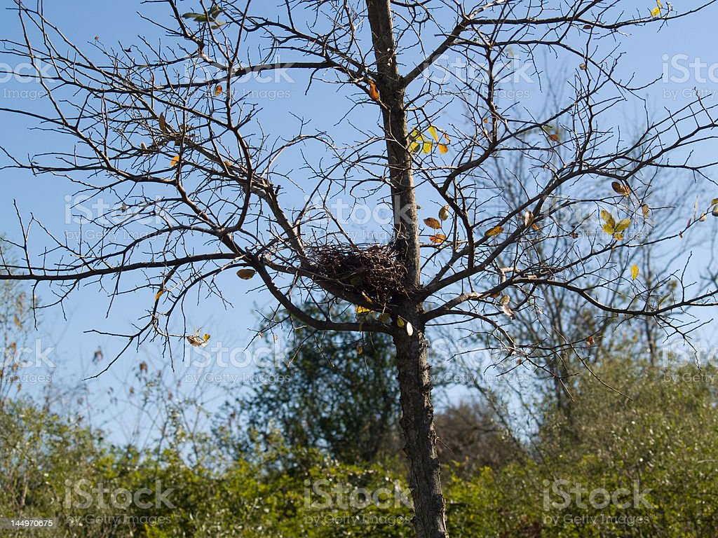 Bird Nest in Tree royalty-free stock photo