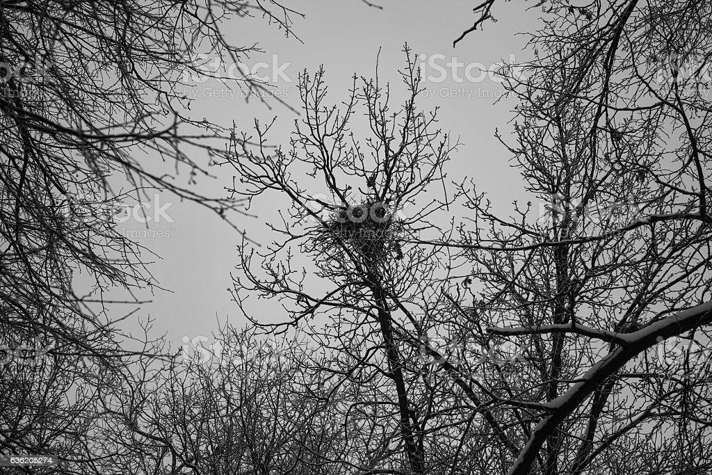 Bird nest on the tree stock photo