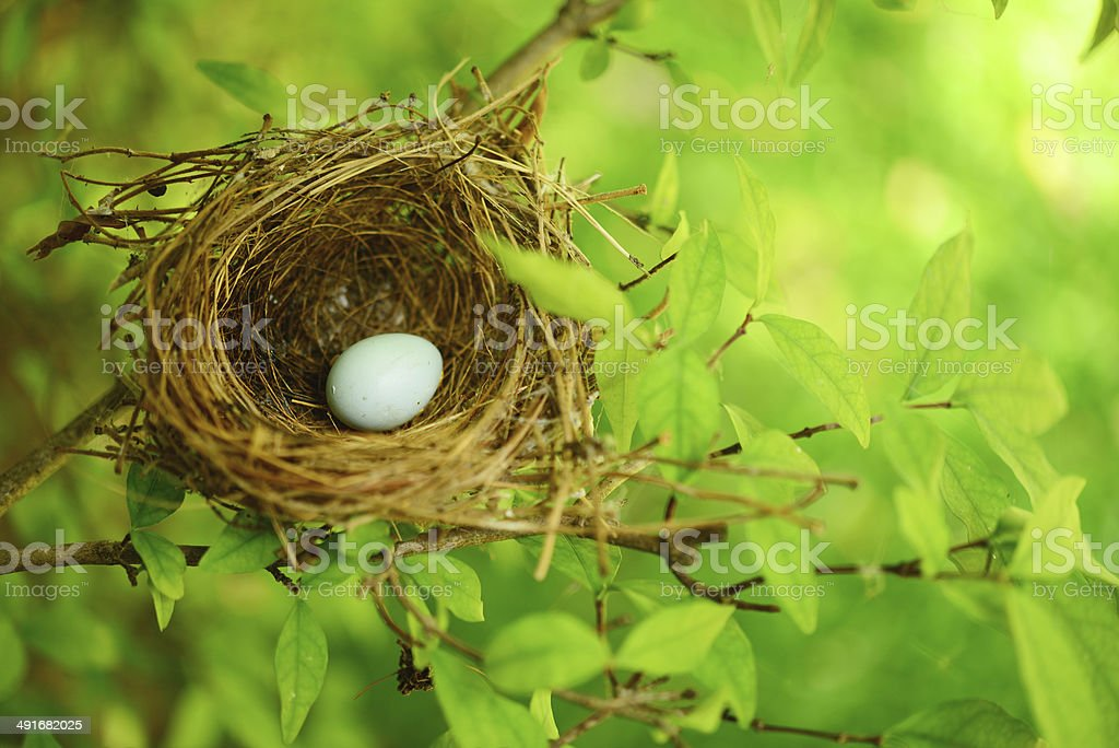bird nest on tree stock photo