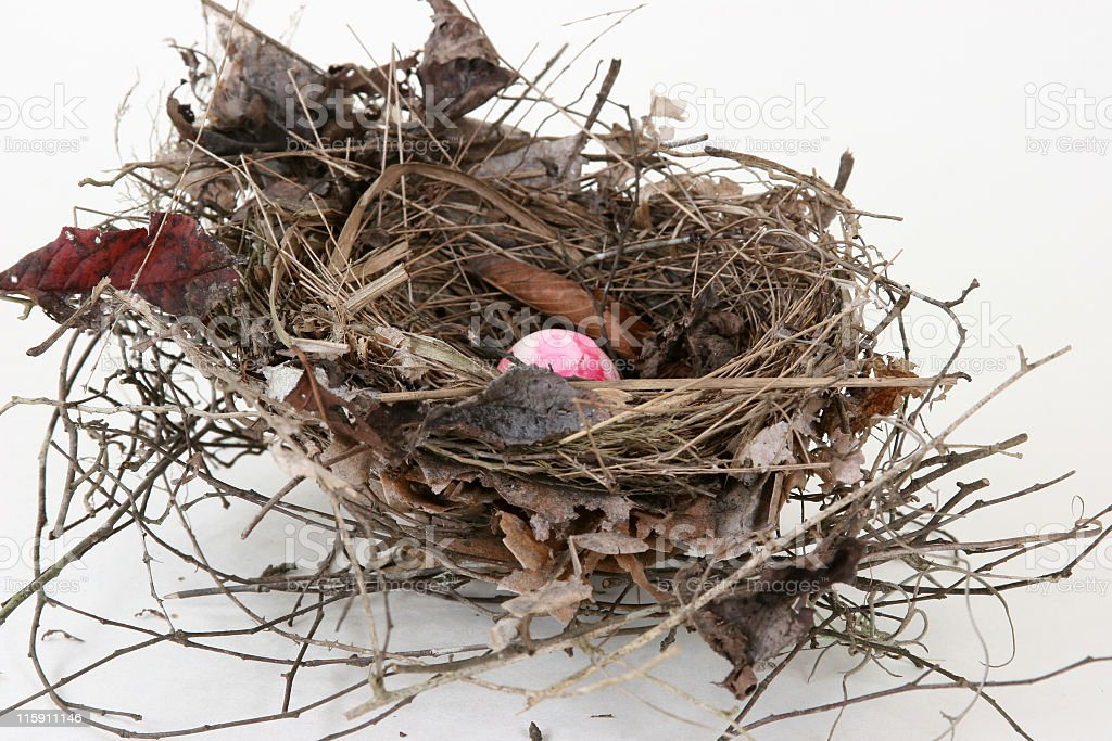 Bird Nest royalty-free stock photo
