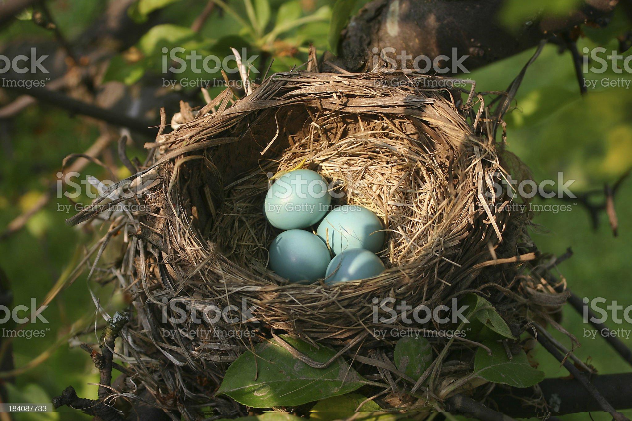 Bird Nest royalty-free stock photo