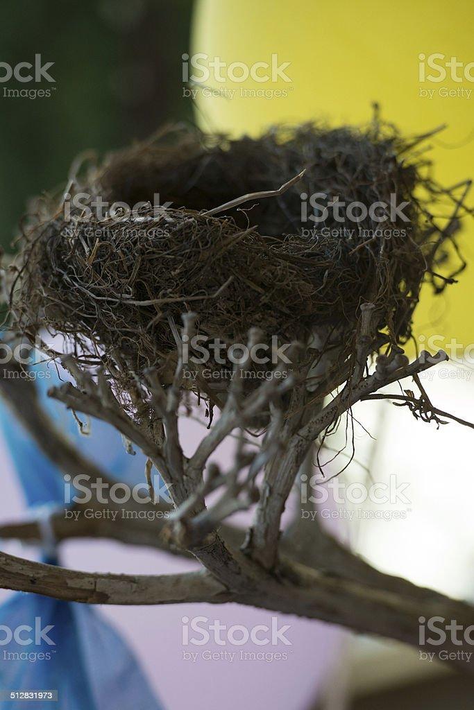 Bird nest. stock photo