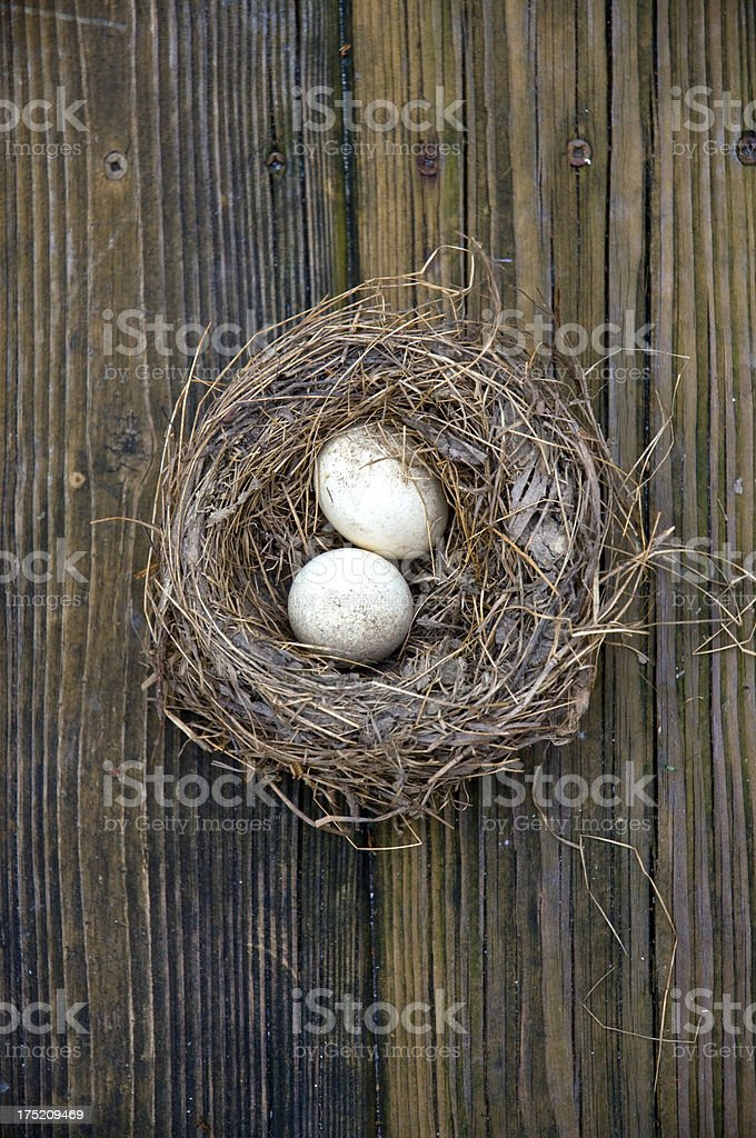 Bird Nest With Eggs Against Wood Decking Boards royalty-free stock photo