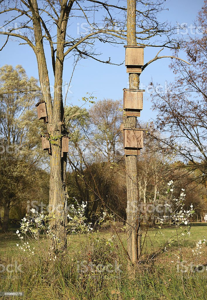Bird nests on tree in the forest royalty-free stock photo