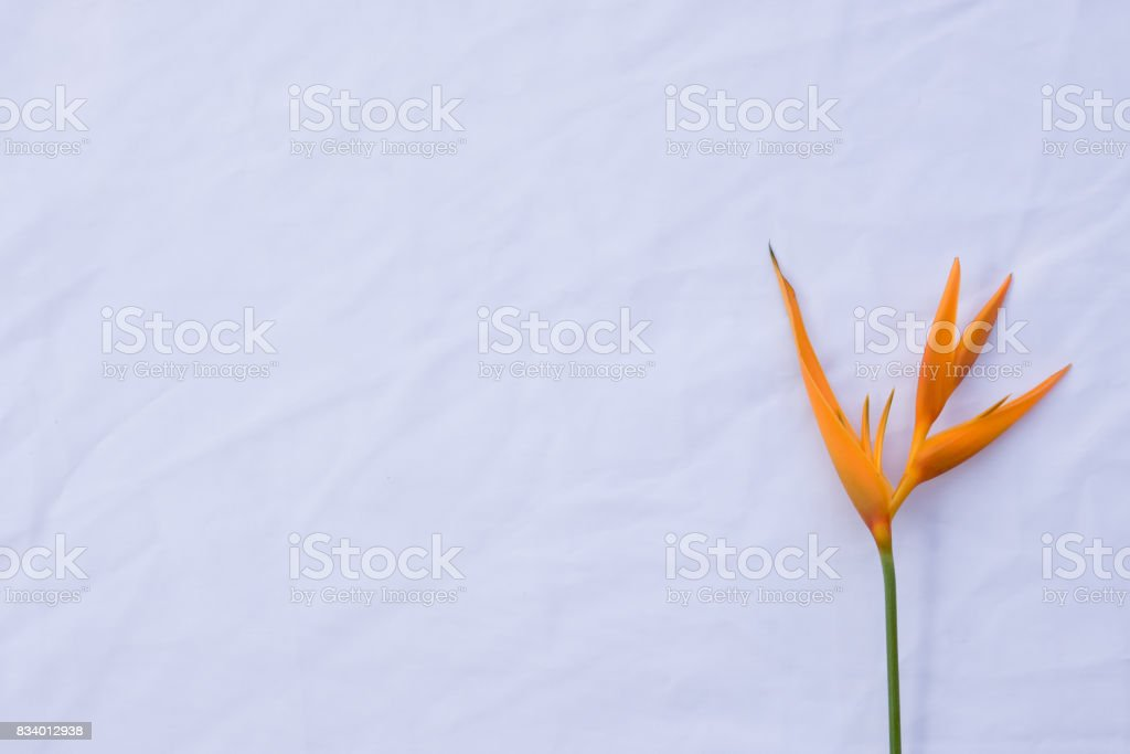 Bird of paradise flower on white fabric stock photo
