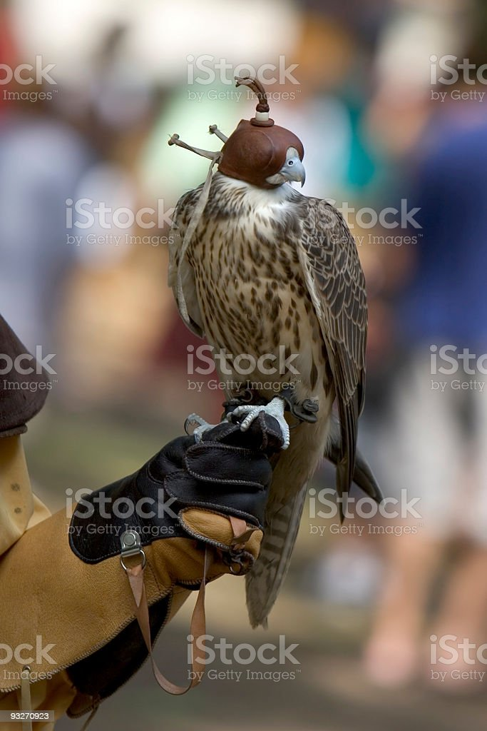 Bird of Prey royalty-free stock photo