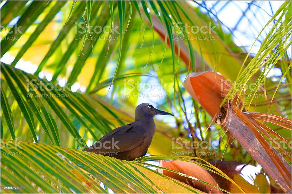 Bird of Rangiroa atoll stock photo