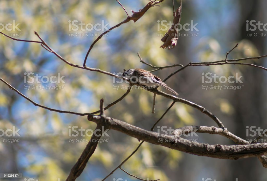 Bird on a Branch stock photo