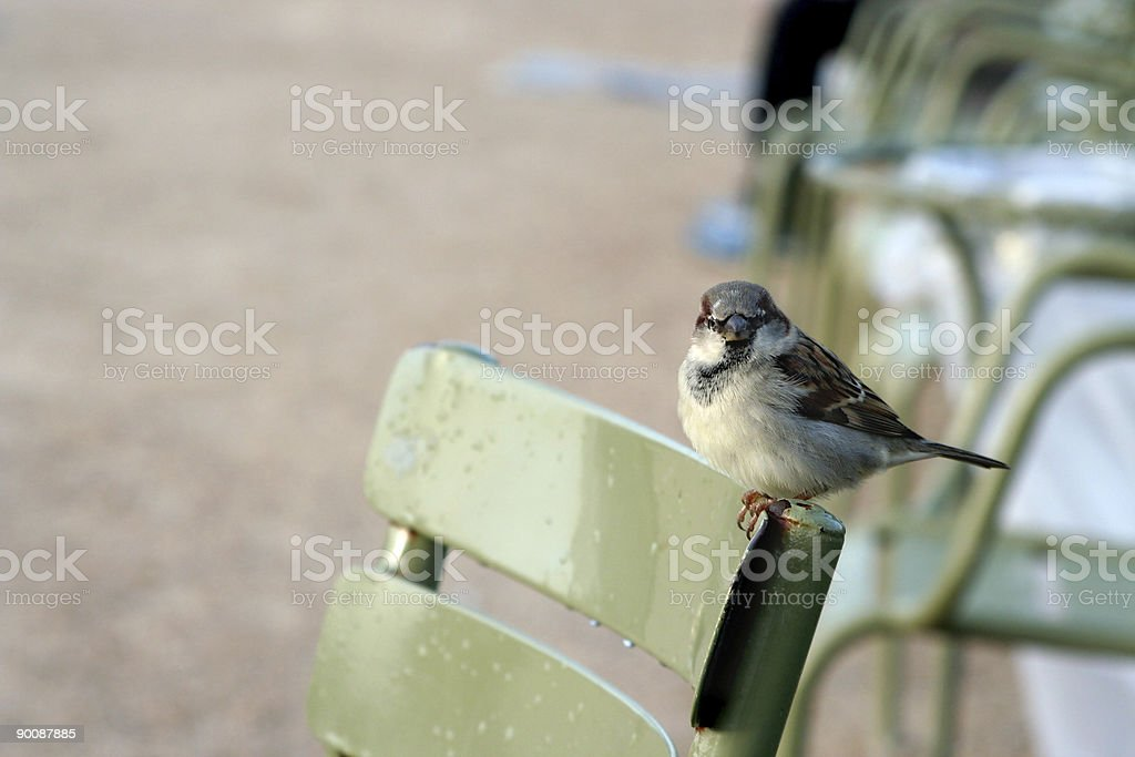 Bird on a chair royalty-free stock photo