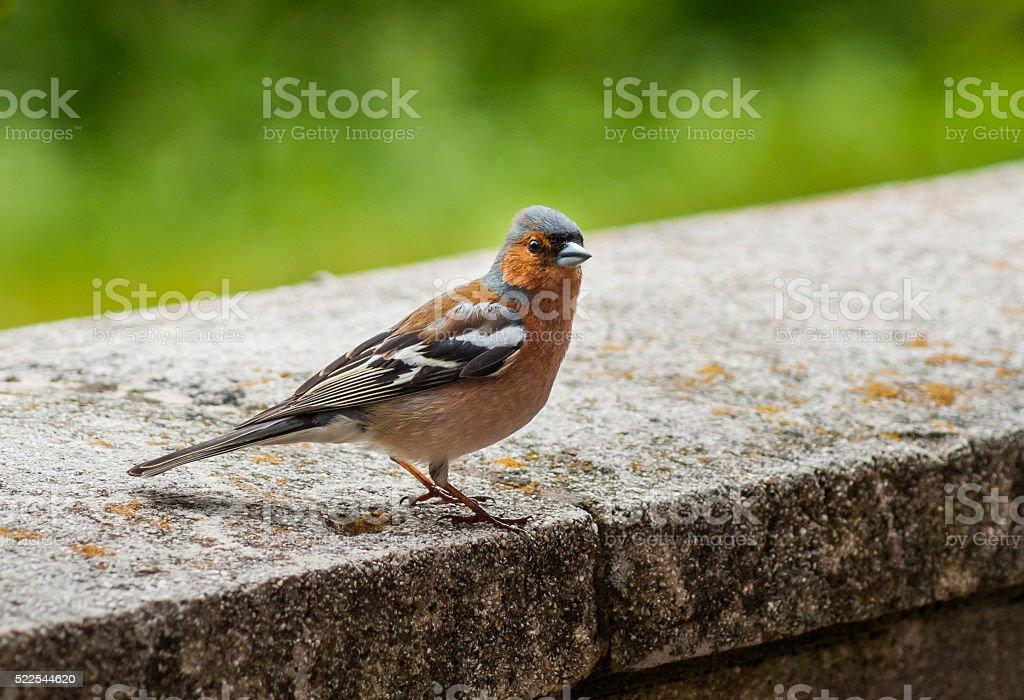 Bird on a concrete platform stock photo