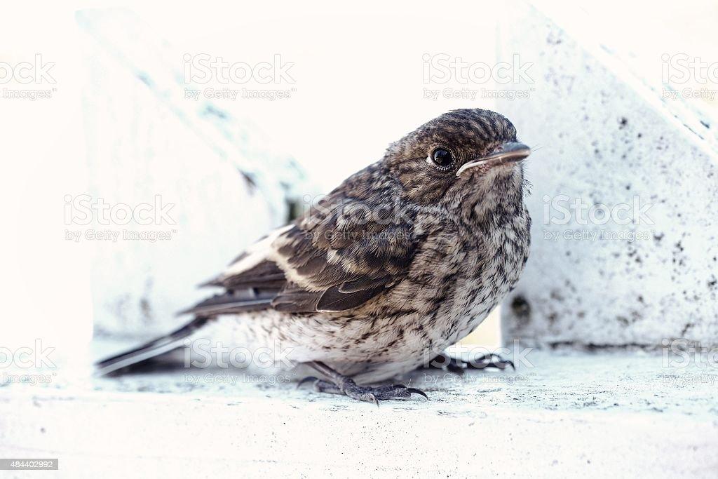 Bird on a fence stock photo