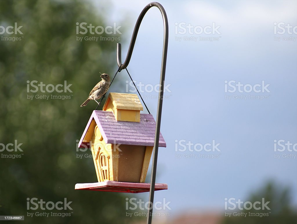 Bird on a House royalty-free stock photo