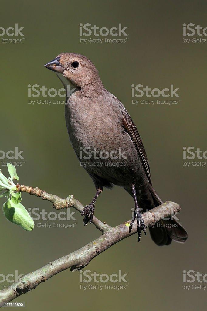 Bird On A Perch stock photo