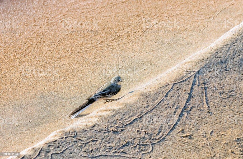 Bird On A Sandy Beach stock photo
