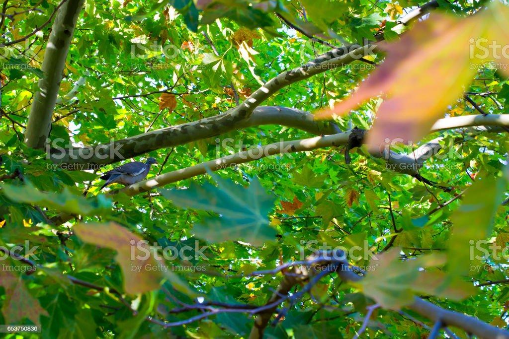 Bird on a tree branch. Arbutus andrachne. stock photo