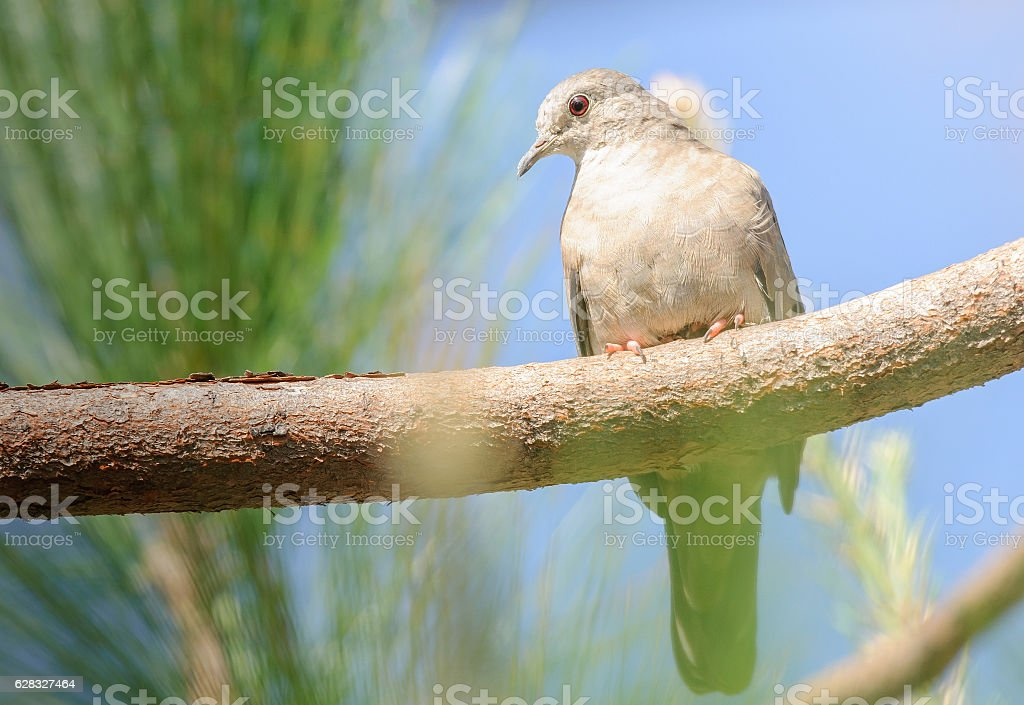 Bird on a tree branch watching carefully. stock photo