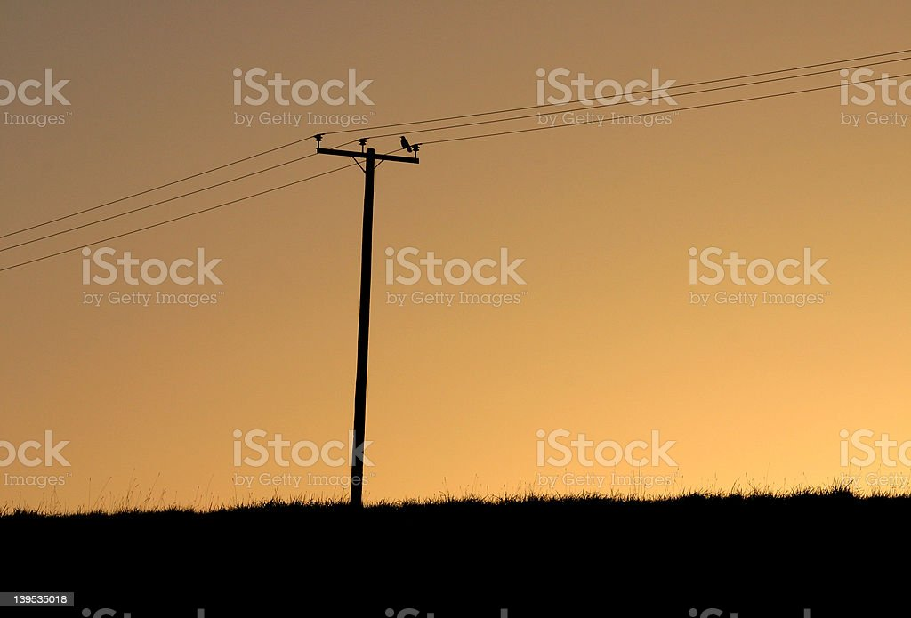 Bird on a wire royalty-free stock photo