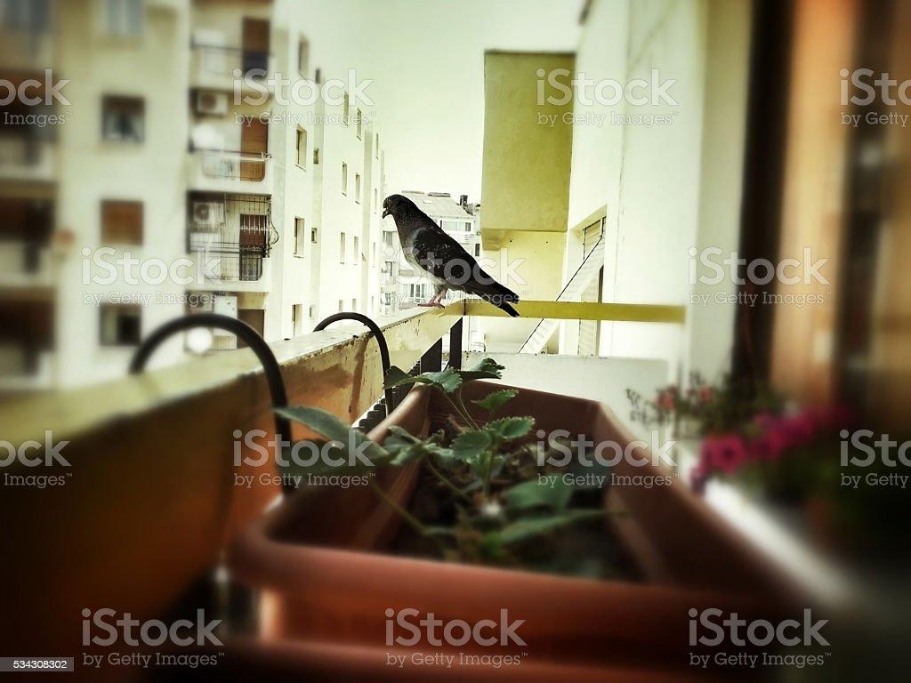 Bird on balcony stock photo