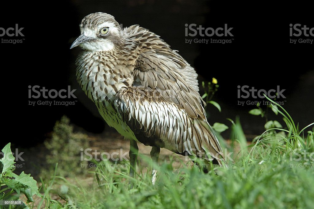 Bird on black background stock photo
