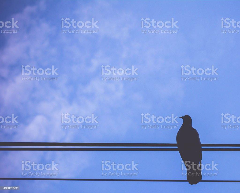 bird on blue sky background stock photo