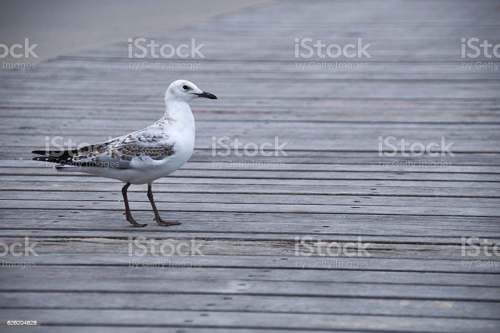 Bird on board walk stock photo