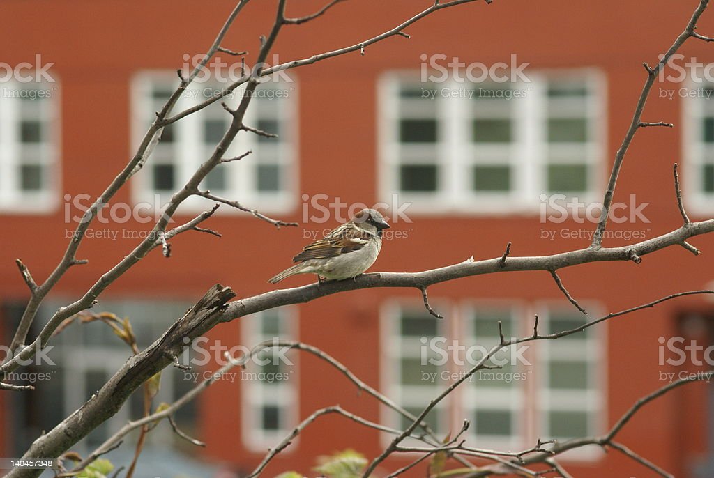 Pájaro en derivación foto de stock libre de derechos