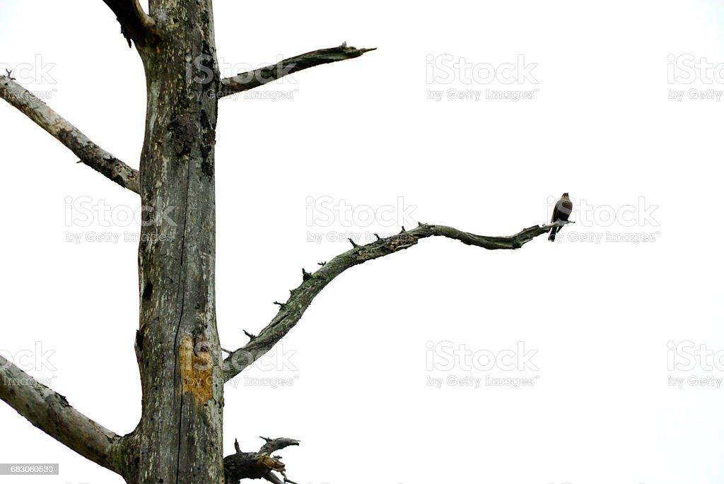 Bird on Dead Branch of Dead Tree stock photo