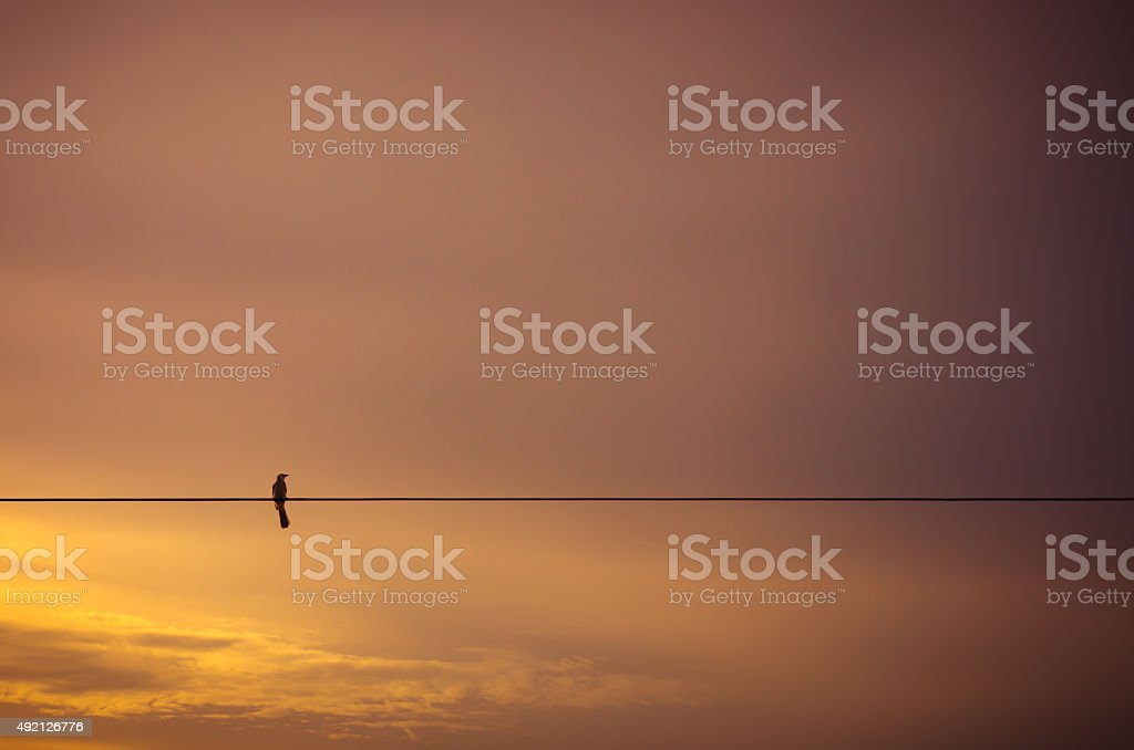Bird on electric wire silhouette stock photo