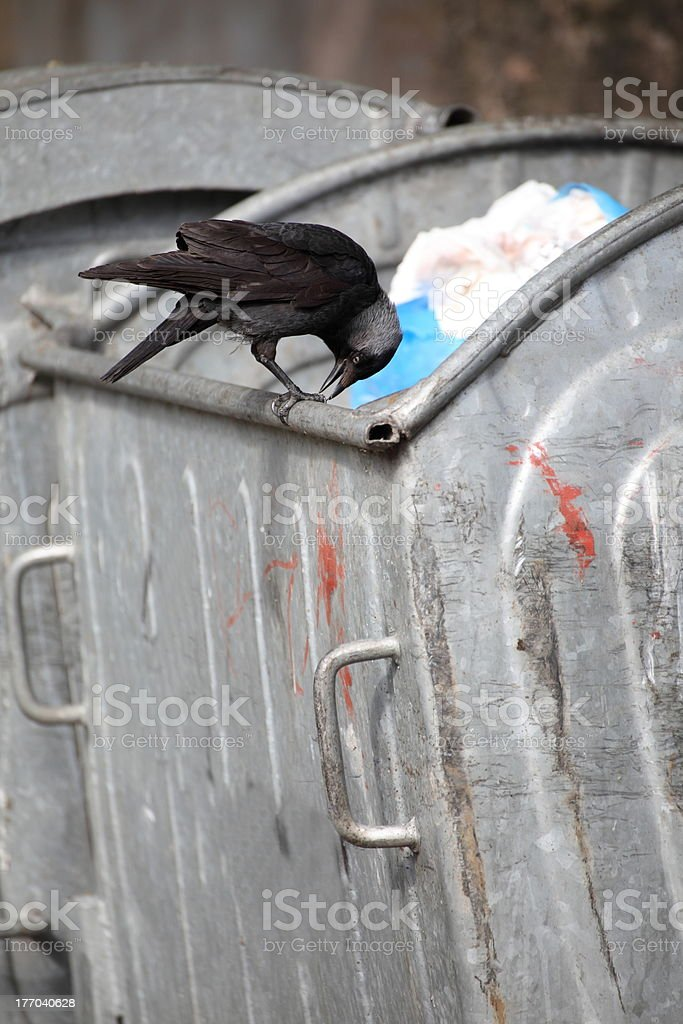 bird on garbage dump royalty-free stock photo