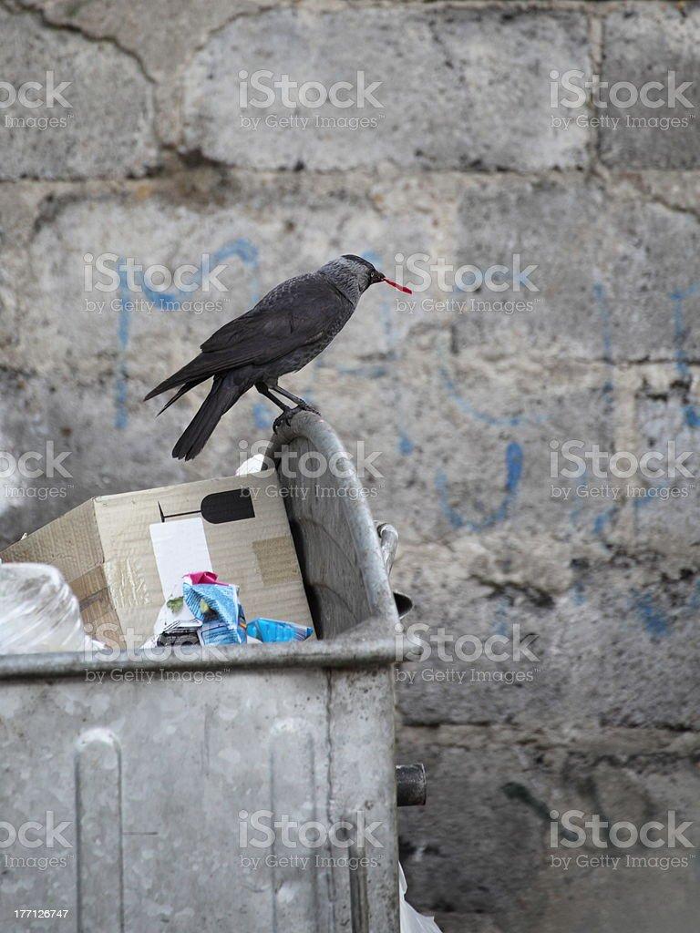 bird on garbage dump royalty-free stock photo