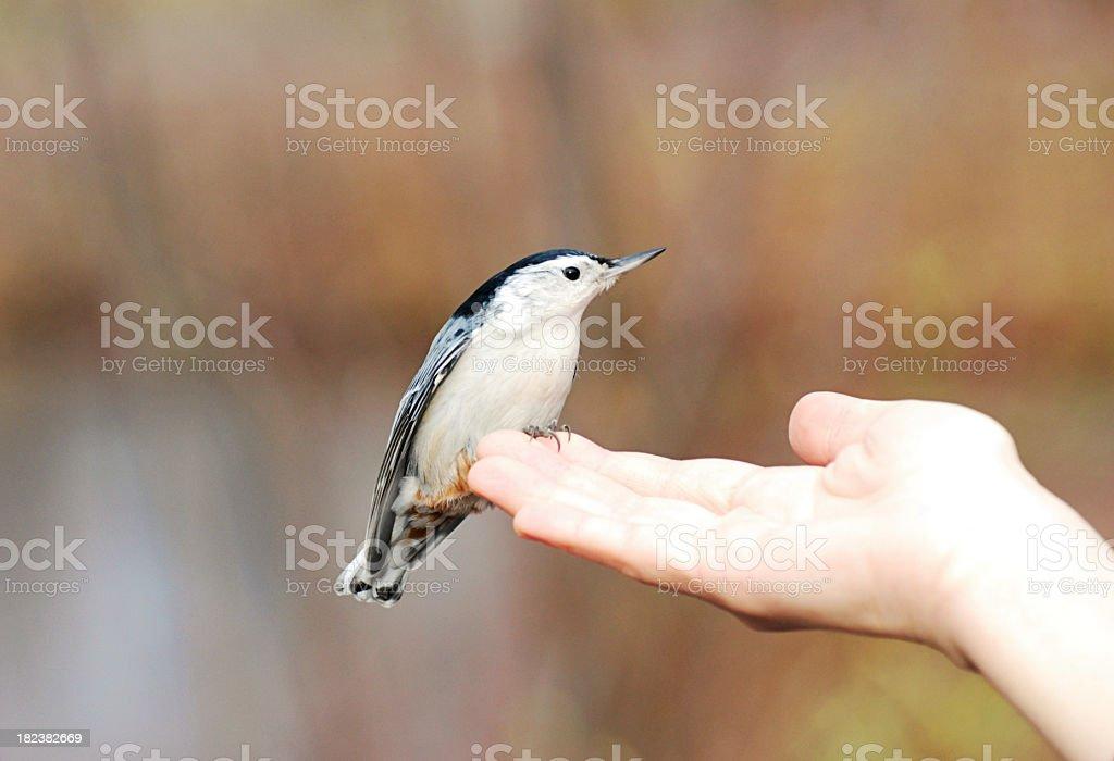 Bird on hand stock photo