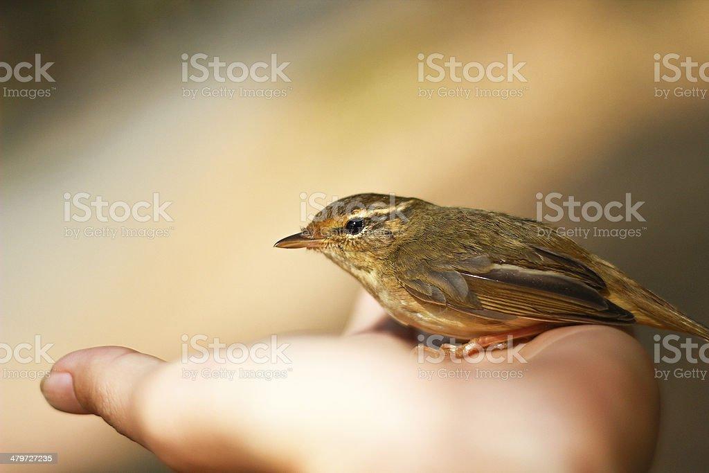 ?bird on hand stock photo
