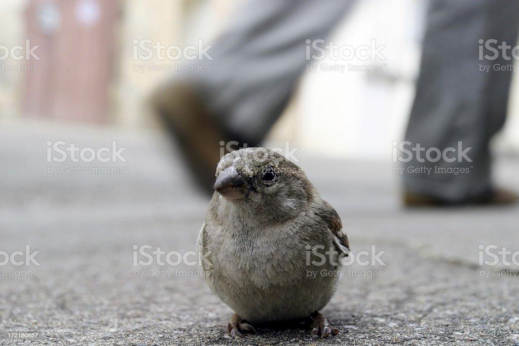 Bird on pavement royalty-free stock photo