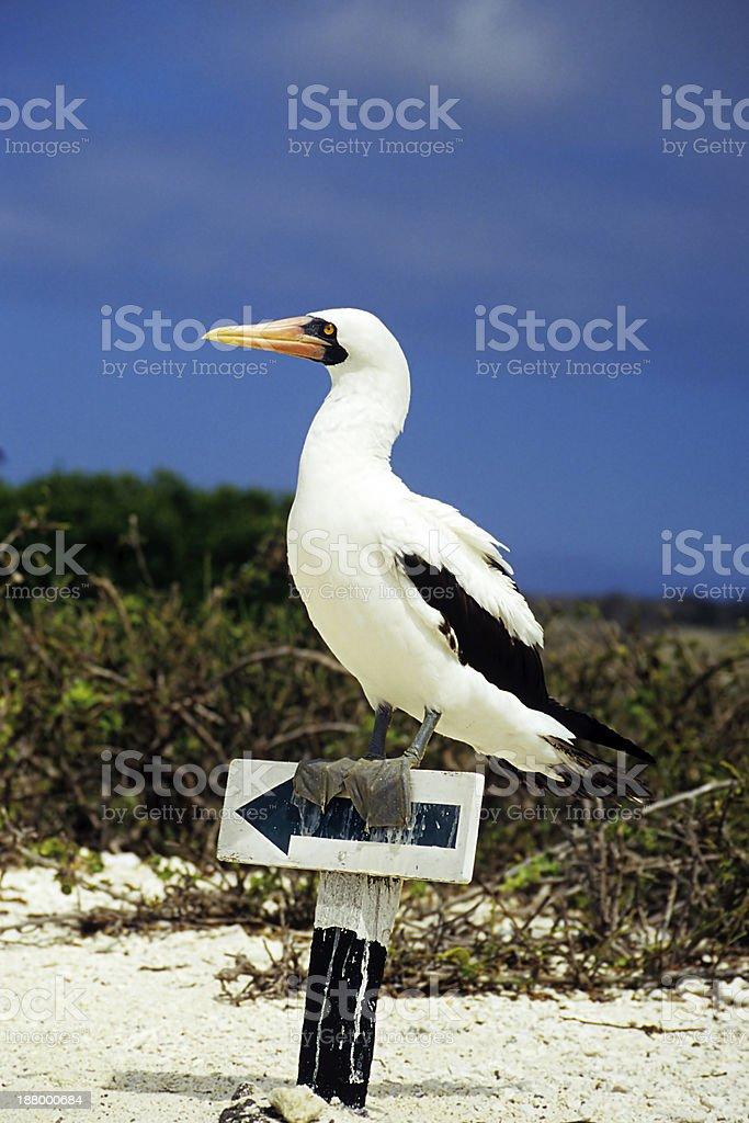 Bird on Signpost stock photo